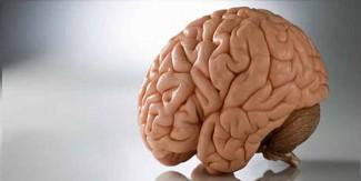 دماغ کو طاقتور بنانے والی 10 غذائیں