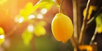لیموں کے چہرے پر استعمال کے 5 فوائد
