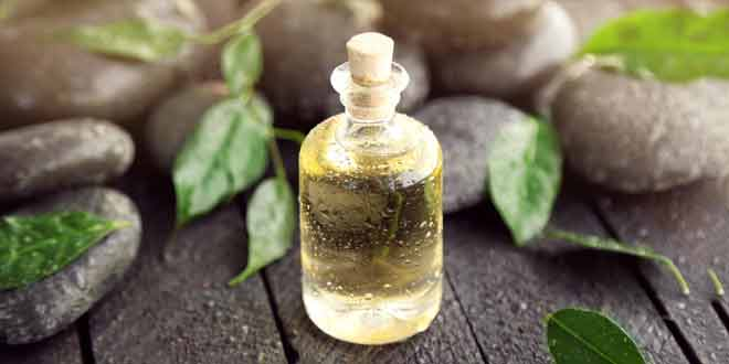 benefits of tree tea oil for hair