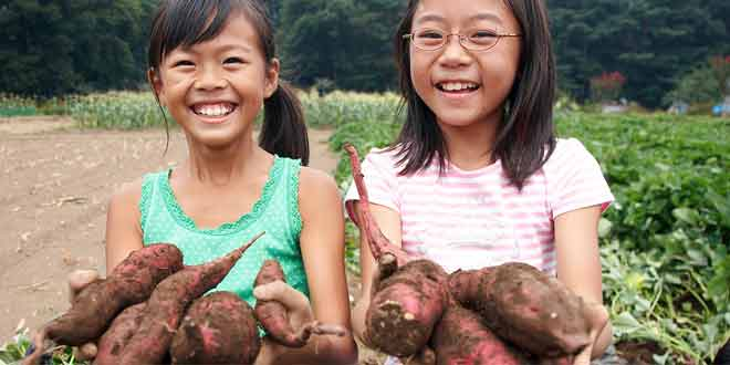 sweet potato for kids health