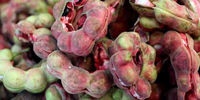 8 health benefits of manila tamarind
