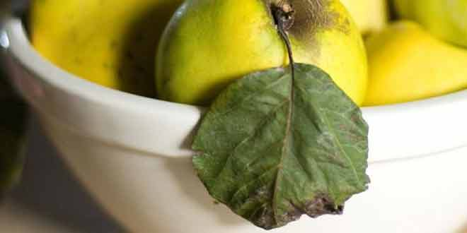 cure cancer, blood pressure and allergy with quince