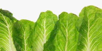 سلاد پتے کے طبی فوائد