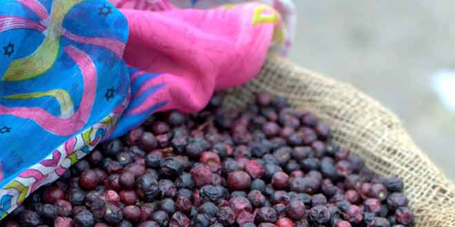 eat falsa to protect yourself from diseases