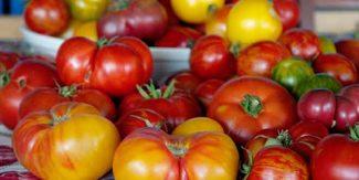 لال ٹماٹر یہ پیلا ٹماٹر کون سا بہتر ہے؟