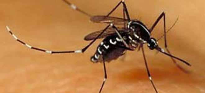 dengue-alert-more-cases-emerge-in-punjab