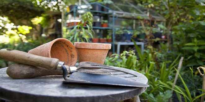 did-you-know-gardening-can-keep-you-healthy-and-happy