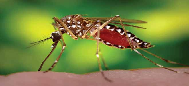 5-asian-scientists-claim-to-have-invented-anti-dengue-vaccination