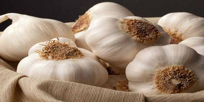 benefits-of-garlic-lassan