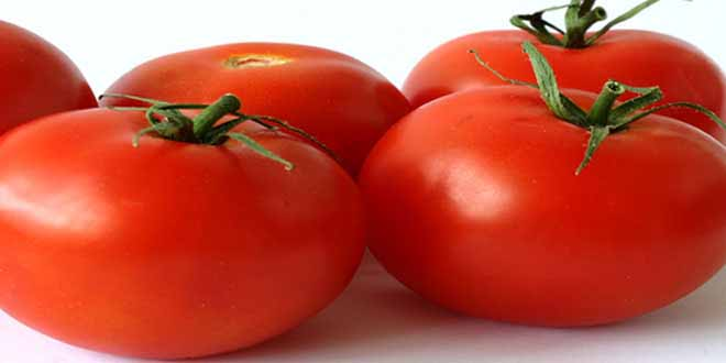 tomatoes-juicy-delicious-and-beneficial
