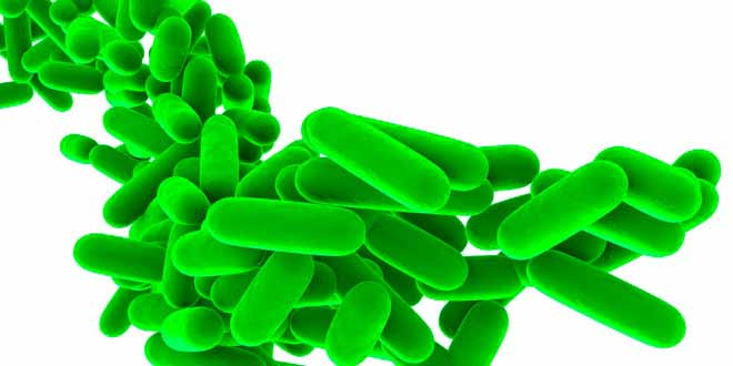 probiotics-and-prebiotics-what-are-they