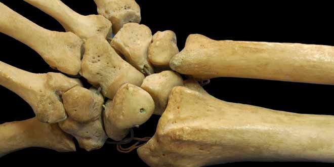 daily-rhythms-and-bone-biology[1]