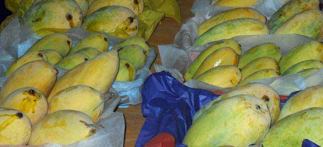 49th-annual-mango-exhibition-held-in-mirpur-khas[1]