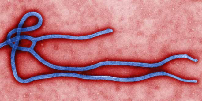 deadly-ebola-virus-accounts-for-a-high-death-toll[1]