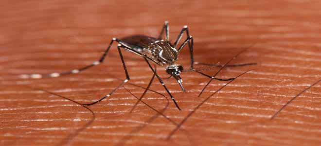 punjab-dengue-update[1]