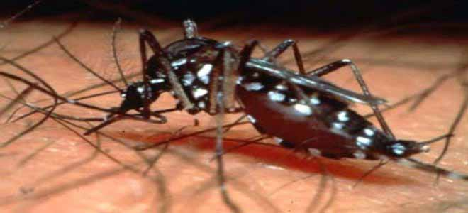 two-more-cases-of-dengue-diagnosed-in-swat[1]