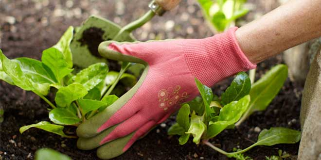 gardening-is-the-way-to-happiness