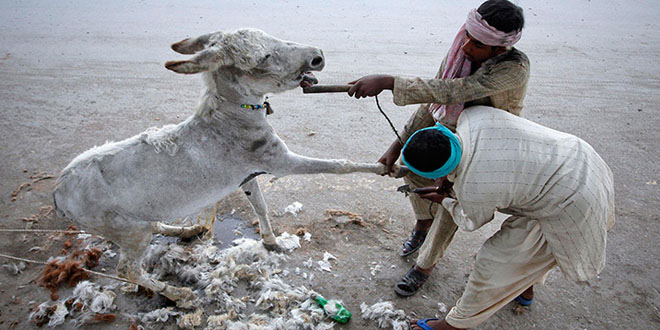 Butchers caught selling donkey meat: Couple arrested for supplying to butchers
