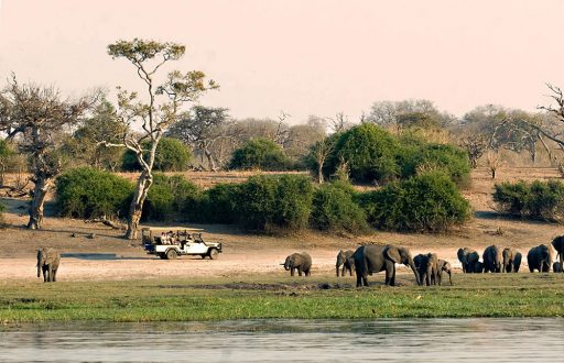 Chobe_National_Park_028