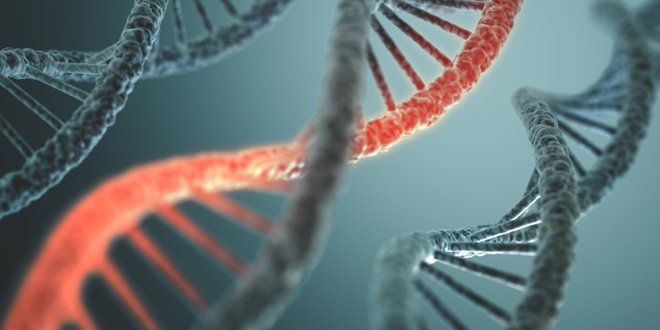 Can we influence our genes?