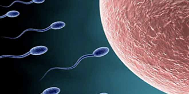 Chinese-scientists-make-sperm-from-mouse-stem-cells