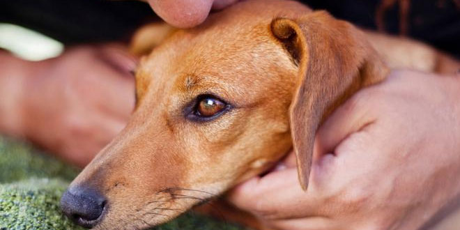 Strong-bond-between-seniors-and-their-dogs-boosts-health