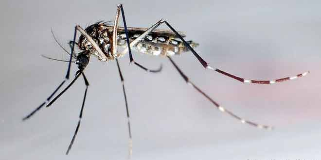 Zika-Virus-Causes,-Symptoms-and-Prevention