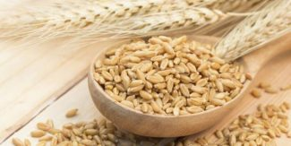 Barley can help to lower 'bad' cholesterol