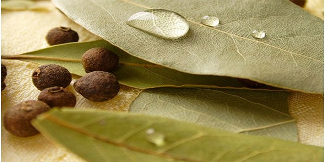 20 Amazing Uses & Benefits of Bay Leaf (Tez Paat) - HTV