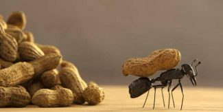 Tips to Get Rid of Ants from Your Home