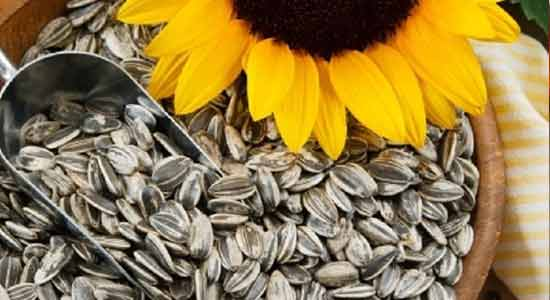 Sunflower Seeds to Lower Your Blood Pressure