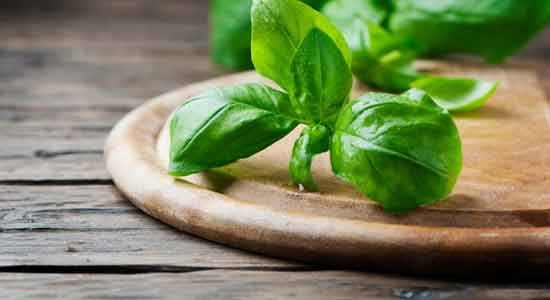 Basil to Purify Your Blood