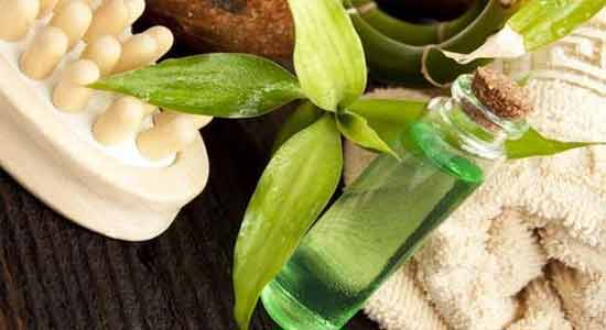 Tea Tree Oil for Bugs and Mosquitoes