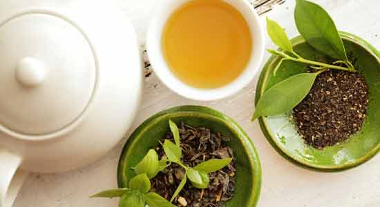 Anti- bacterial Properties of green tea