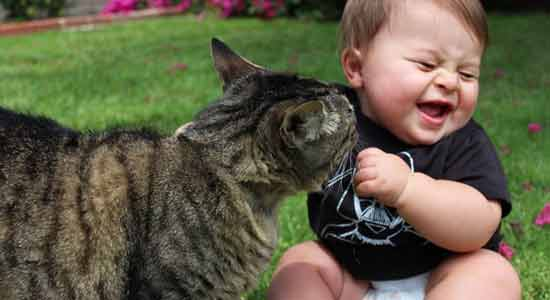 Pet Faeces Toxins that Your Baby Should Not be Exposed
