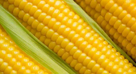 Corn to Recover Iodine Deficiency