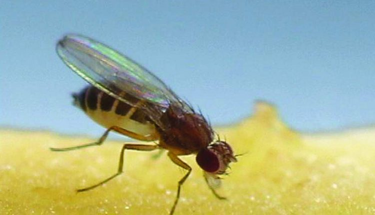 The Rise Of Flies In Karachi Htv