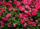 flower-show-10