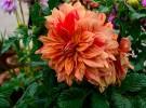 flower-show-12