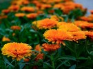 flower-show-4