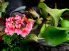 flower-show-5