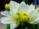 flower-show-6