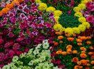 flower-show-8